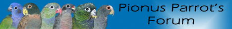 Pionus Parrot's Forum -  A Community of  Pionus Parrots plus other parrot species! Please join us there!