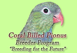 Pionus Parrot's Website - Breeder Program Image