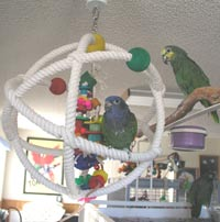 "Pionus Parrot's Website - Our Birds love the ""Atom"" - we sell these here on our website!"