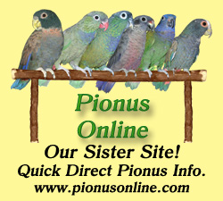 Pionus Parrot's Website - Our Sister Website of Pionus Online