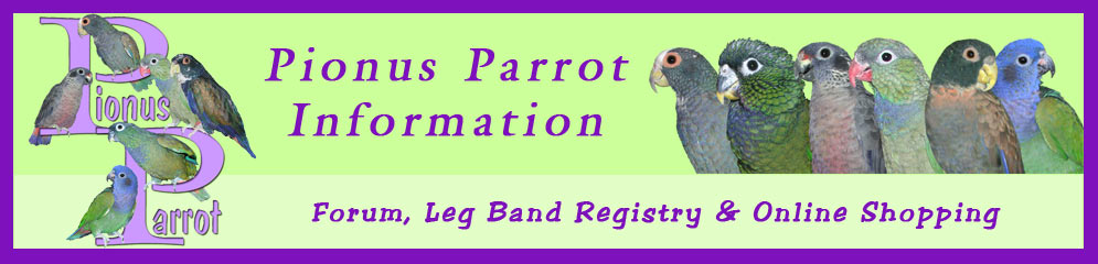Pionus Parrot's Website -  Pionus Babies, Information, Toy Catalog, Forum and many other things! www.pionusparrot.com